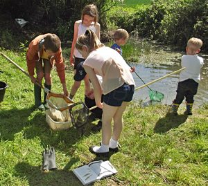 Pond dipping in Stone in Oxney